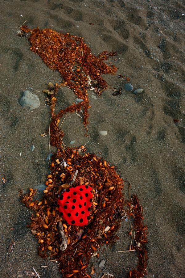 ladybug hat seaweed